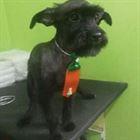 Pet Shop em Campinas (1)