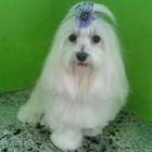 Pet Shop em Campinas (2)
