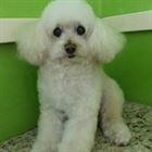 Pet Shop em Campinas (3)