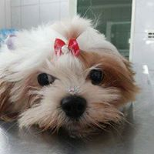 Pet Shop em Campinas (4)