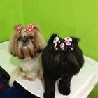 Pet Shop em Campinas (6)