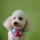 Pet Shop em Campinas (7)