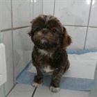 Pet Shop em Campinas (8)